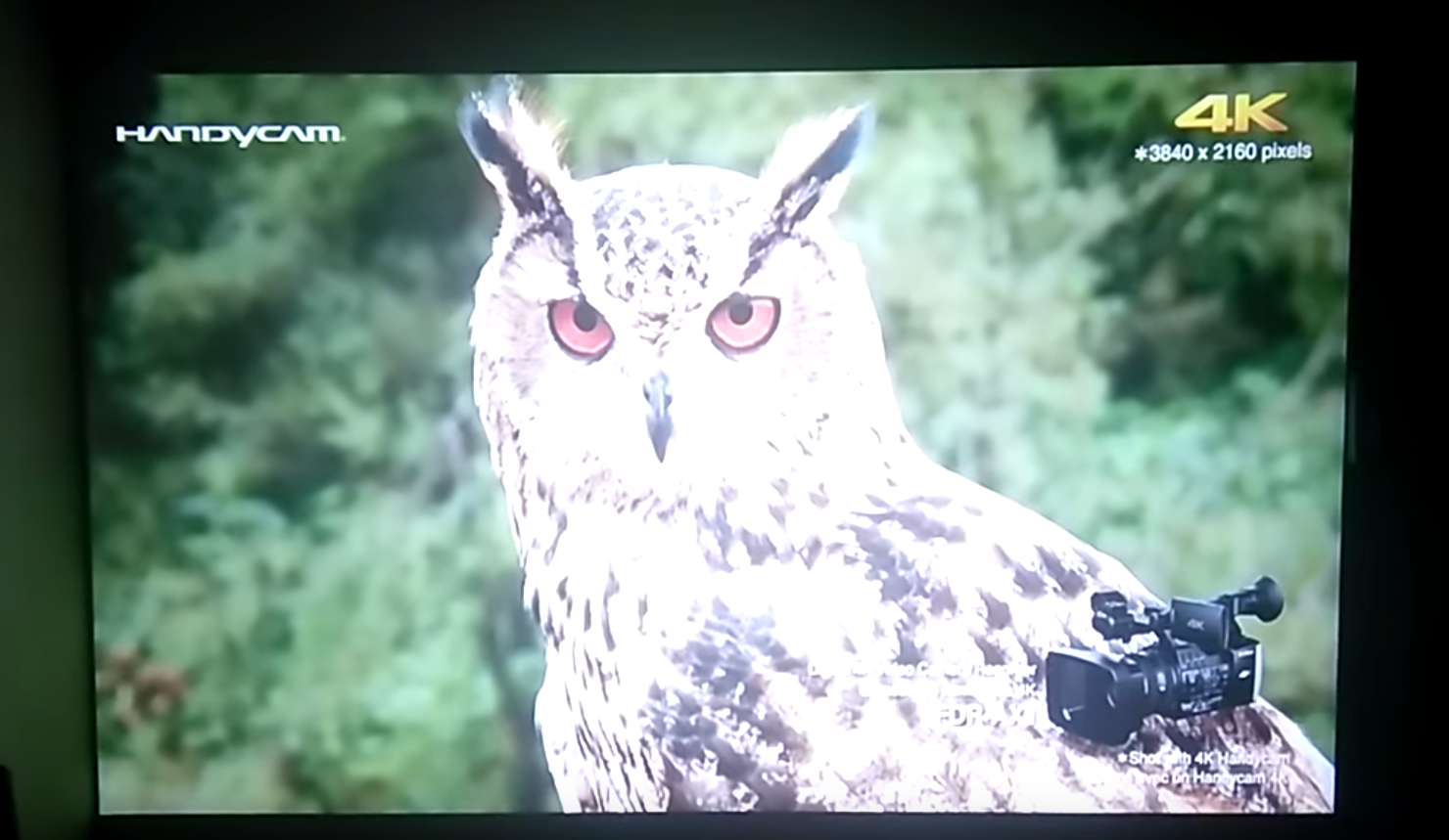 Excelvan CL720D; showing the picture quality of the projector; image of the owl and trees behind it.