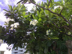 Tree with flowers captured by Teclast X10 Plus Tablet's Camera