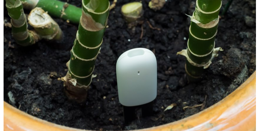 COUPON Xiaomi flower care plant sensor and monitor now available at